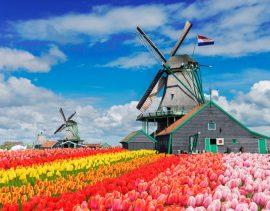 investire-in-olanda