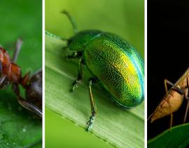 previdenza complementare 3 bug