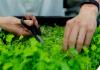 etf sostenibili borsa italiana